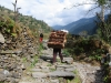 man-taking-chickens-up-annapurna-trek-nepal
