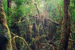 Tasmania's Rainforest